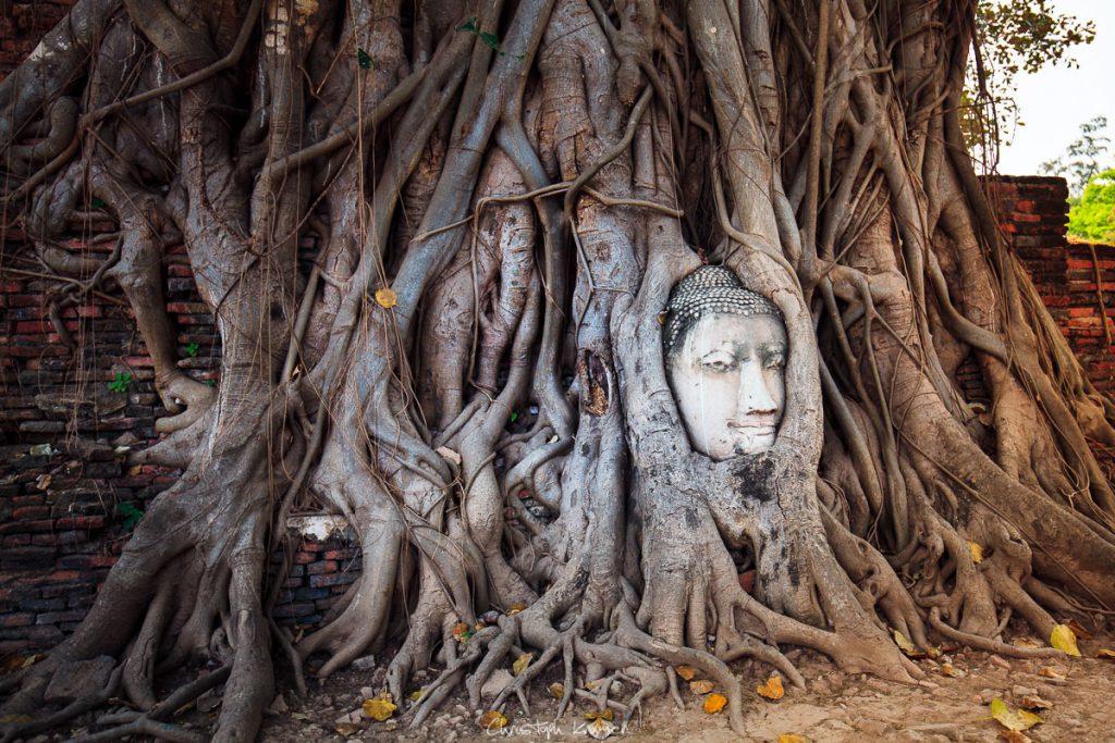 eingewachsener Buddha