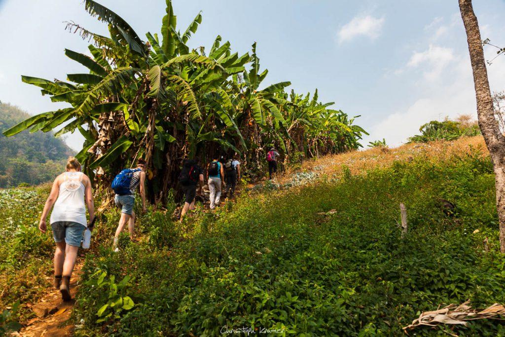 Wandern im Dschungel von Mae Traen