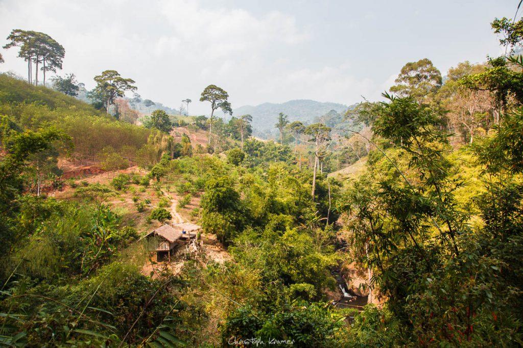 Dschungel von Mae Traen