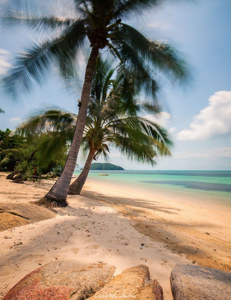 Palmen auf Koh Phangan