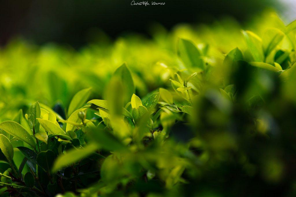 Blumen und Pflanzen in Tangalle - Blende f2,8
