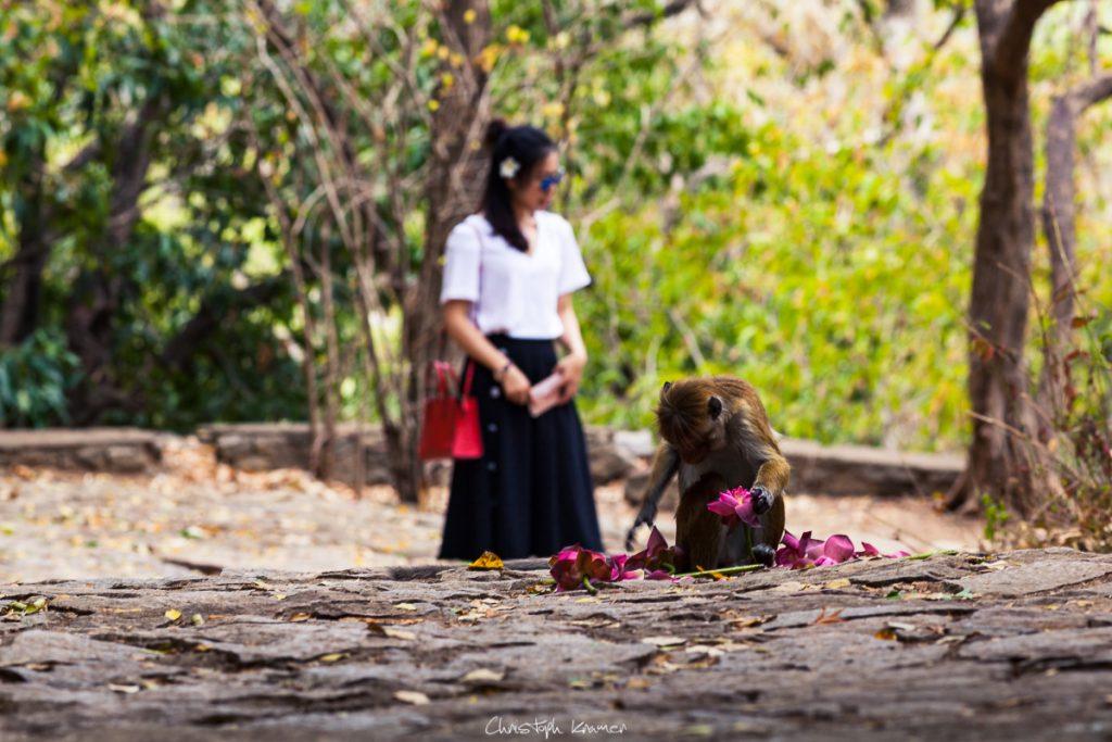 Affen auf Beutezug