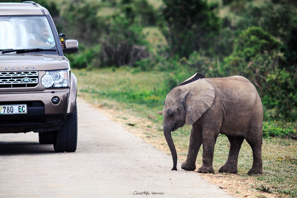 Ein Elefanten Baby