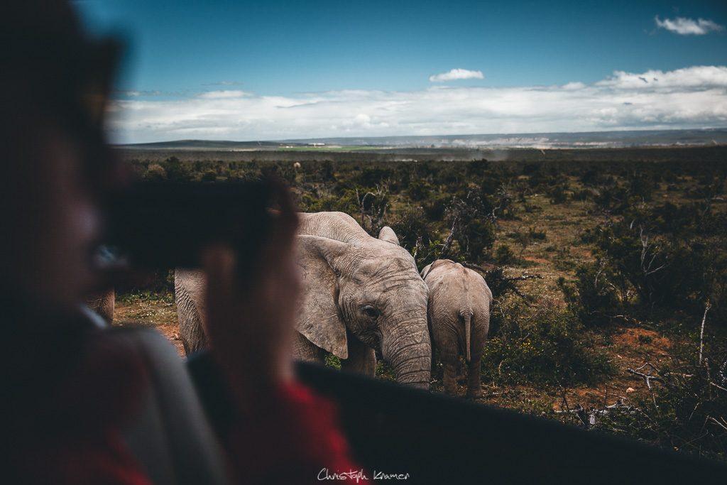 Den Elefanten ganz nah