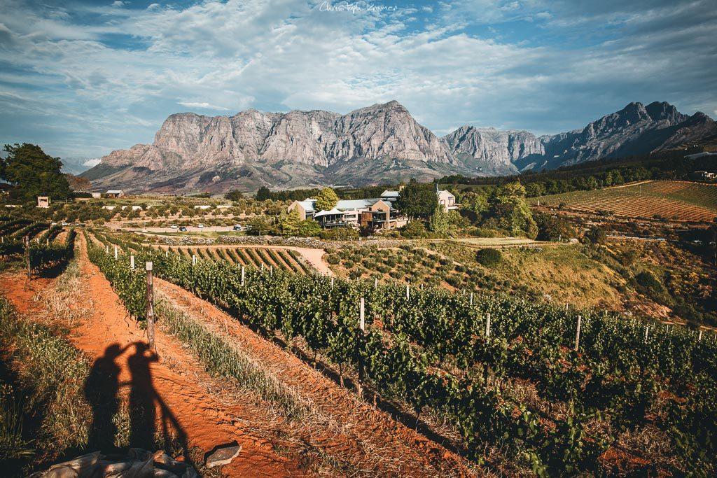 Tokara Weingut in Stellenbosch