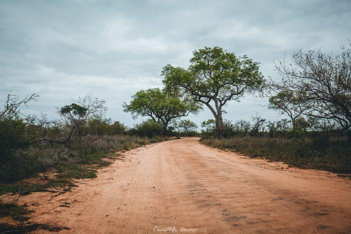 Die Landschaft im Kruger Park