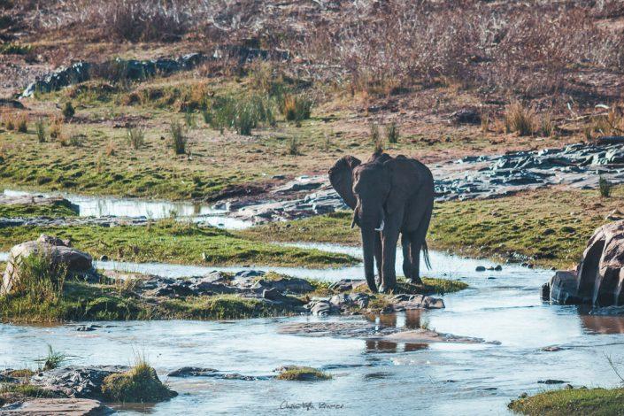 Ein Elefant an einer Wasserstelle