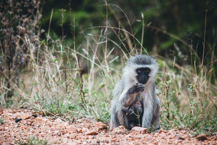 Affen Mutter mit ihrem Baby