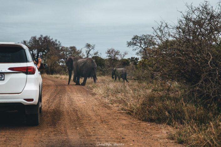 Elefanten Herde laufen durch die Autos