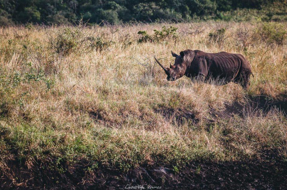 Hluhluwe - Nationalpark der Nashörner
