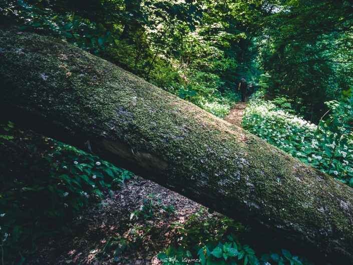 Ein Baum versperrt den Weg