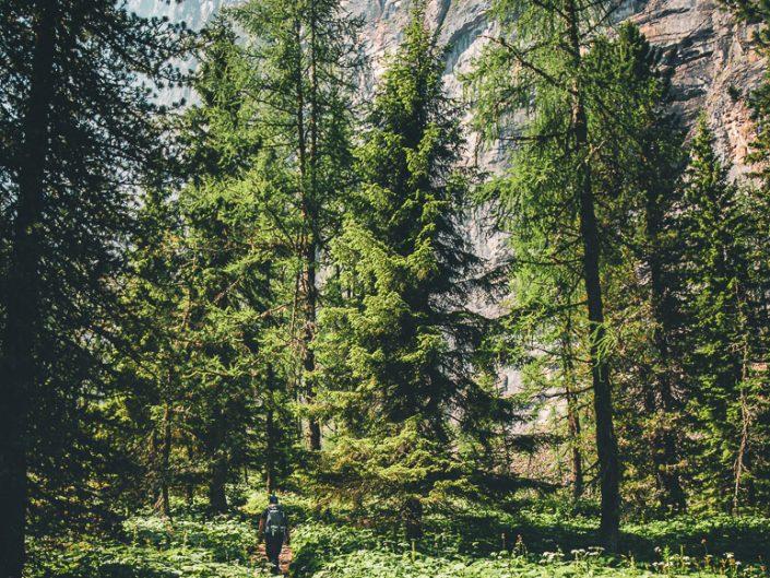 wunderschönes Waldstück kurz vor der Doldenhornhütte