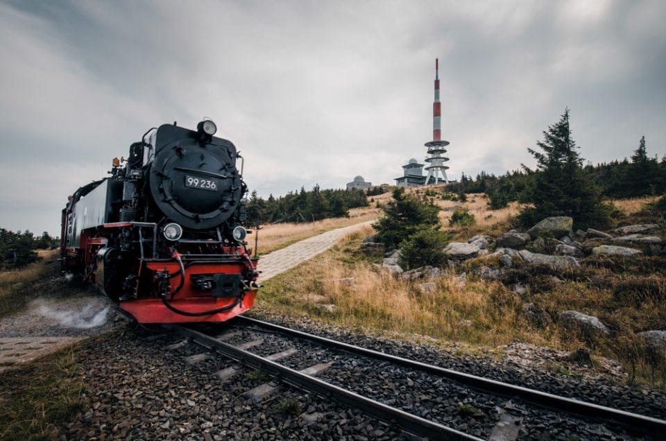 sterbender Wald im Harz